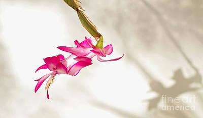 Light..flower..shadow Original by Kaye Menner