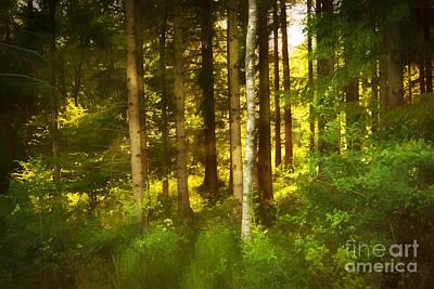 Photograph - Lightful Forest by Lutz Baar