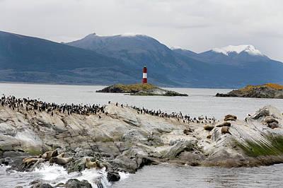 Lighthouse On Tierra Del Fuego Coastline Art Print