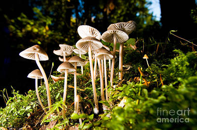 Photograph - Lighthouse Park Mushrooms 4 by Terry Elniski