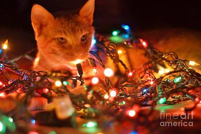 Photograph - Lighting Up The Christmas Cat by Lynda Dawson-Youngclaus