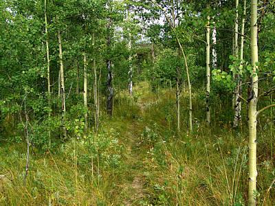 Photograph - Lightly Used Trail by Thomas Samida