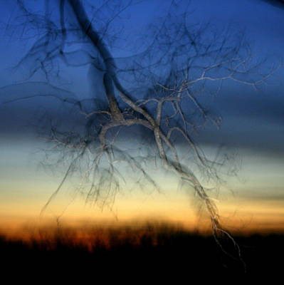 Photograph - Lightning Branches by Neal Eslinger