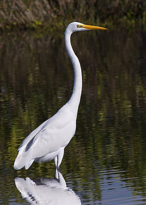 Like A Great Egret Monument Art Print by John M Bailey