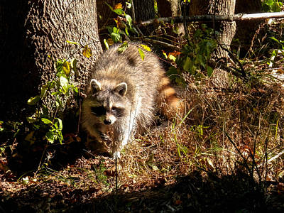 Photograph - Lil' Bandit by Heather Sylvia