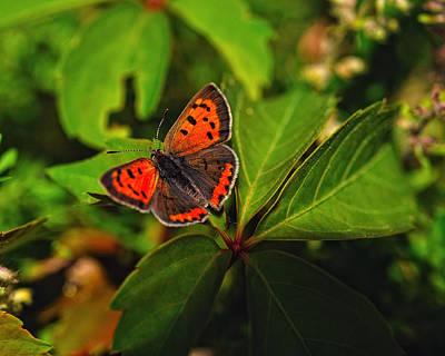 Digital Art - Lil' Butterfly by Angel Cher