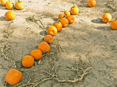 Pumpkin Fields Photograph - Li'l Pumpkins by Colleen Kammerer