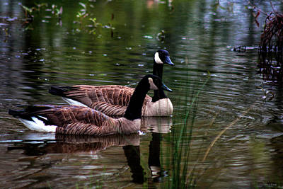 Photograph - Lila Goose And The King by Lesa Fine