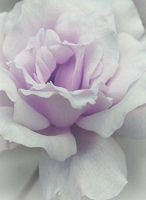 Lilacs Photograph - Lilac Beauty Rose by The Art Of Marilyn Ridoutt-Greene
