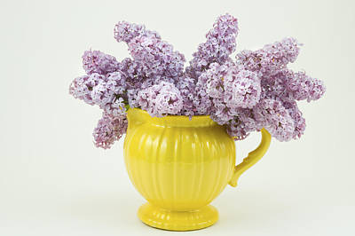 Photograph - Lilac Boquet - Yellow Vase by Keith Webber Jr