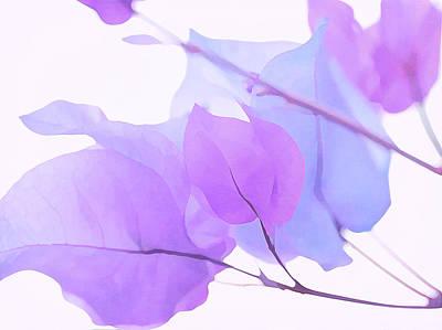 Photograph - Lilac Bougainvillea by Fraida Gutovich