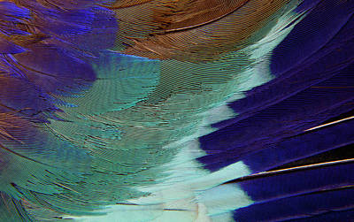 Lilac Roller Photograph - Lilac Breasted Roller Feathers Pattern by Darrell Gulin
