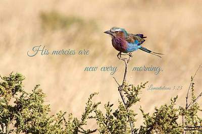 Photograph - Lilac Breasted Roller In Kenya by June Jacobsen