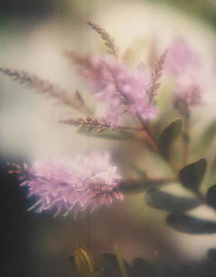 Photograph - Lilac by Erik Poppke