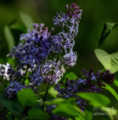 Lilac Fantasia Art Print by Inspired Nature Photography Fine Art Photography