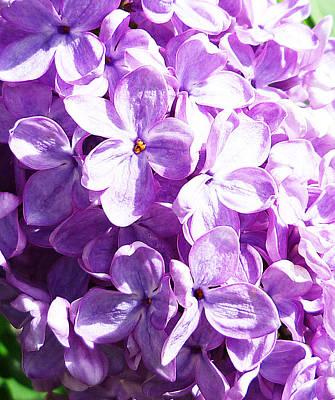 Close Views Photograph - Lilac by Irina Sztukowski