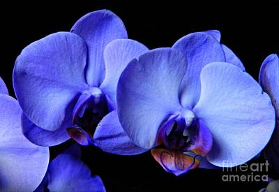 Photograph - Lilac Orchids 1 by Chalet Roome-Rigdon