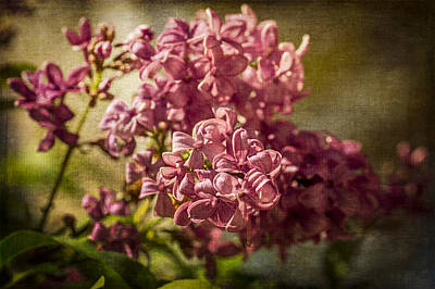 Photograph - Lilac With Textures by Wayne Meyer