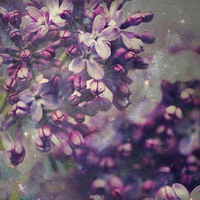 Photograph - Lilac by Yulia Kazansky