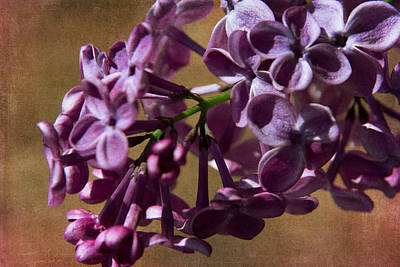 Photograph - Lilacs Fragrant Memories Of Home by Denyse Duhaime
