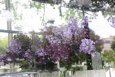 Lilacs Hanging Basket Window Reflection - Dreamy Lilacs Floral Art Art Print by Kathy Fornal