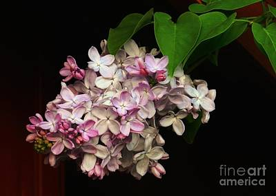 Photograph - Lilacs Of Spring by Sharon Woerner