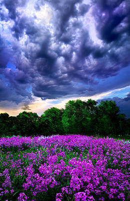 Photograph - Lilacs by Phil Koch
