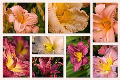 Photograph - Lilies And Daylilies Eight Collage by Theo OConnor