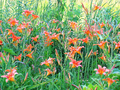 Photograph - Lilies In Bloom - Digital Painting Effect by Rhonda Barrett