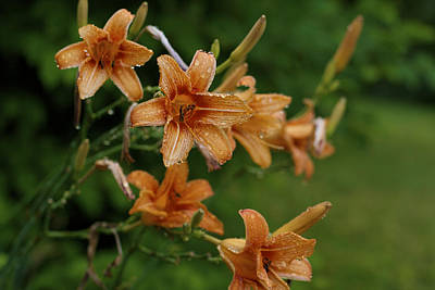 Photograph - Lilies In The Rain by Jane Eleanor Nicholas