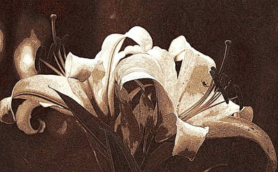Photograph - Lilies  by Kathy Sampson