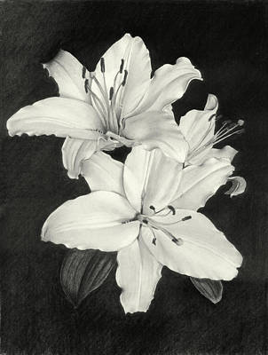 Drawing - Lilies by Nicola Butt