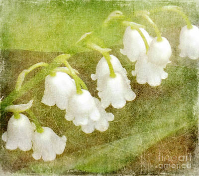 Spring Digital Art - Lilies Of The Valley by Alys Caviness-Gober