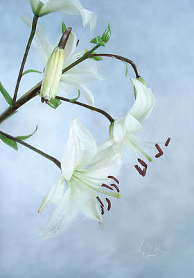 Photograph - Lilies On Blue by Louise Kumpf