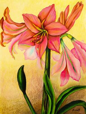 Blooming Drawing - Lilies by Zina Stromberg