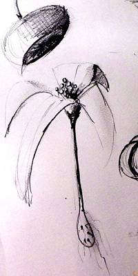 Lilies Drawings - Lilium observation by Marcello Cicchini