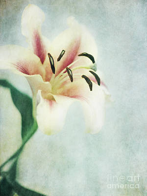 Flower Wall Art - Photograph - Lilium by Priska Wettstein