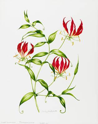 Lilium Painting - Lilium Rothschildiana by Sally Crosthwaite