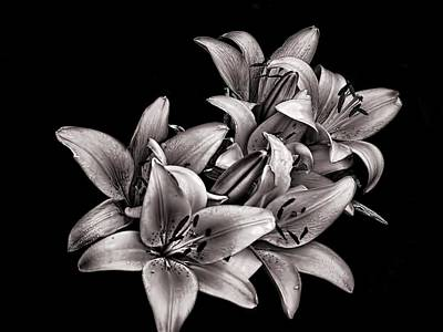 Photograph - Lillies by Robert Knight