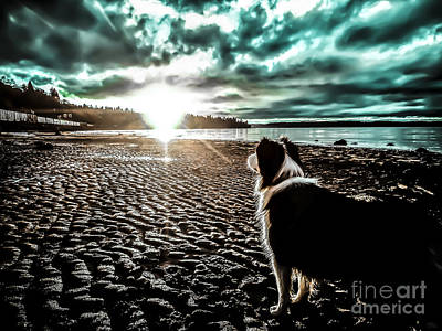 Photograph - Lilly And The Sun by Arlene Sundby