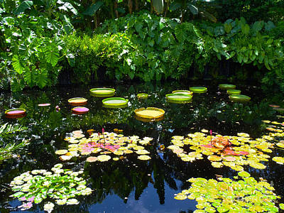 Lilies Royalty-Free and Rights-Managed Images - Lilly Garden by Carey Chen