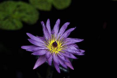 Photograph - Lilly Glow by Donald Brown