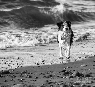 Photograph - Lilly On The Beach by Arlene Sundby