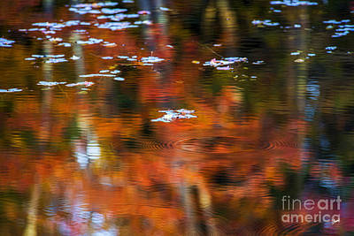 Photograph - Lily Pads by Alana Ranney