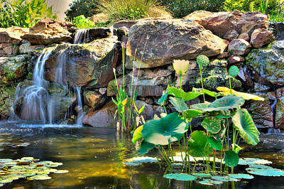For Sale Photograph - Lily Pads By The Waterfall by Geoff Mckay