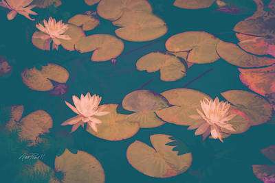 Lilly Pond Digital Art - Lilly Pads In Pink  by Ann Powell