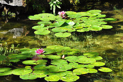 Photograph - Lilly Pads by Kirt Tisdale