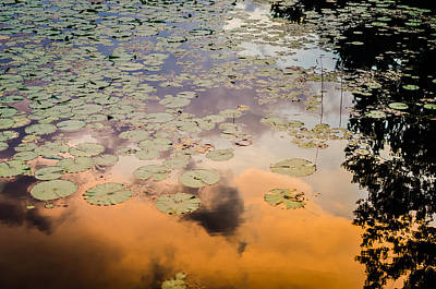Photograph - Lilly Pads Sunset Reflection by Anthony Doudt