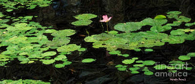 Digital Art - Lilly Pond Oahu by Mindy Bench