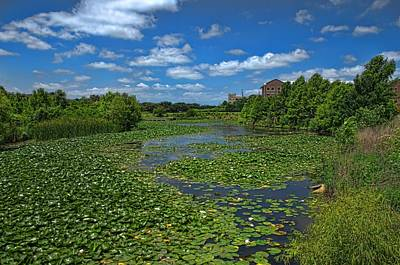 Photograph - Lilly Pond  by Tim McCullough